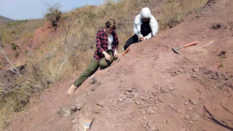 未知生物!云南禄丰出土3岁恐龙幼体化石
