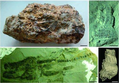 福建发现1500万年前的化石宝库——漳浦生物群